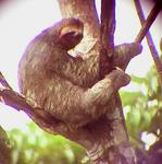 A sloth, I took this picture through the telescope.