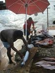 The only fresh fish on the island is bought from these local fishermen.