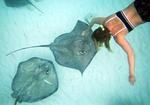 Cherie touching the velvet-smooth skin of a Southern stingray.