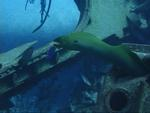 An eel wiggles himself back into the wreckage. *