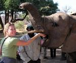 Kristi feeds the elephant.