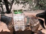 Supai has the only mail in the US carried by mules.