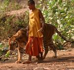 Monk with tiger. *Photo by Yorham.
