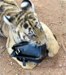 The cub just loves my purse.