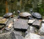 Turtle conference.  They are saying:  What are we going to do with all these weird statues?