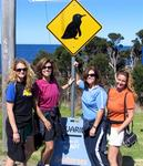 Penguin-crossing in Bicheno.  (Yes, there are fairy penguins in Tasmania!)