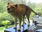 Scientists say that the Tasmanian tiger is extinct, but locals claim the tiger still lurks in the depths Tasmania's wilderness.