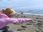 Michelle points at all the elephant seals.