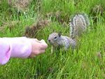 The nutty critters take the food right out of your hand.