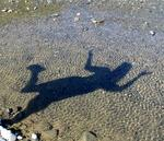 Who knew that your shadow could be so much fun?