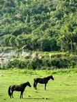 Two horses pose in the Punakaiki River Valley.