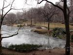 Winter in NY's Central Park.