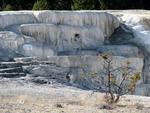 Another visit to Mammoth Hot Springs.