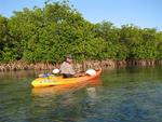 Greg kayaking in the mangroves.