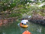 It feels like we are floating through a mangrove tunnel.