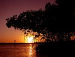 Sunset in the mangroves.
